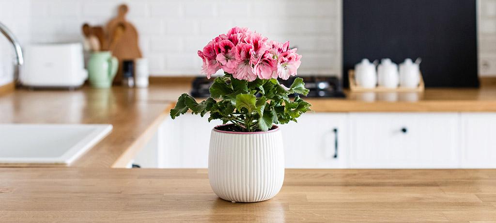 5 Flores De Verano Para Decorar Jardinería Y Terraza
